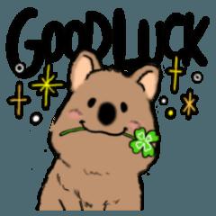 Smiley Quokka