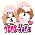 Shih Tzu Couple YaYa & YoYo