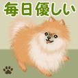 Pomeranian greets3