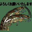 車エビ ビジネス編