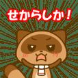 Kumamoto valve Sticker of raccoon