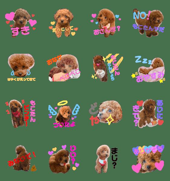 「スーパー天才アイドル犬★もこたんさん!!」のLINEスタンプ一覧