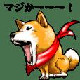 赤マフラー柴犬。