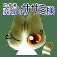 Beautiful cat SASAMI