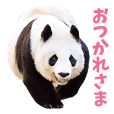 Cute animal photo stickers
