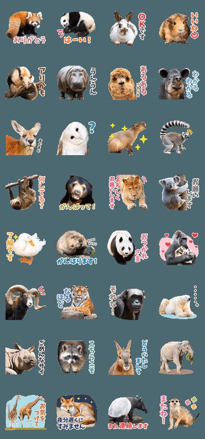Cute animal photo stickers