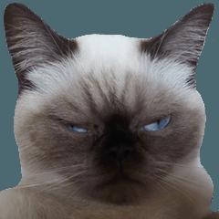 神悅貓貓公主殿下