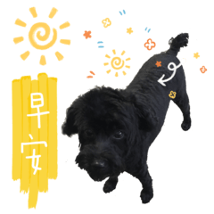 Pudding Dog (Daily)