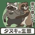 Raccoon dog ecology