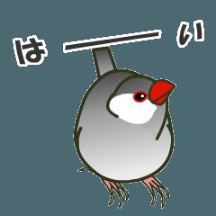 Do you want to say something? Bun-chan