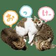 菅沼家の猫たちver.1