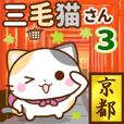 京都の三毛猫さん3