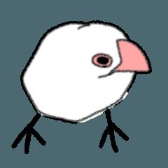 Pleasant bird.
