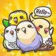 喜樂鸚鵡-小鸚、玄鳳、和尚、虎皮