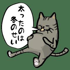 キモかわネコの冬の日常(灰トラ猫)