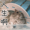 Hamster Paradise of Yo Ger