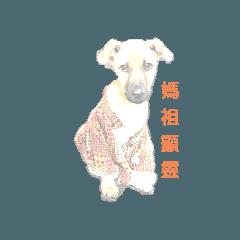 kim baby dog life