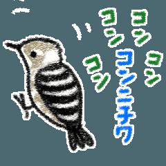 Funny wild bird