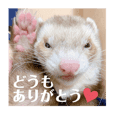 The cute ferrets stickers 2