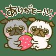 Kuro pug chan spring