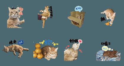 Orange Meow Meow