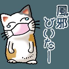 I love cats! Part25 (Japanese Bobtail 5)