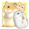 Lovely tiny hamsters and humorous hammy
