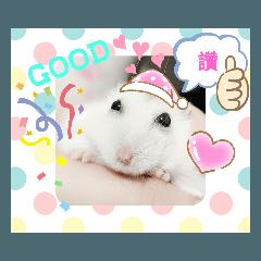 hamster Bean Bean life