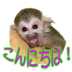 Squirrel Monkey Baby 2