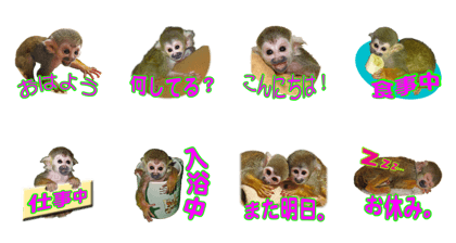 Squirrel Monkey Baby 2