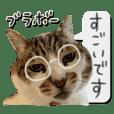 My cat's Teto's sticker
