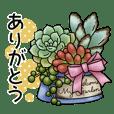 かわいい多肉植物2