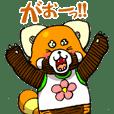"""Lesser panda """"Baby Letsu"""". (JP ver)"""