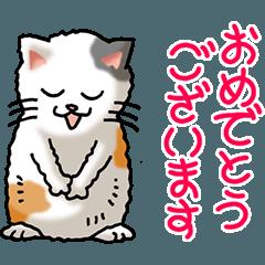 Congratulations part 1 (cat)