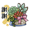 Cute succulent plants 2(CHT)