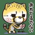 猫チーター 毎日☆使う[日常会話]セット