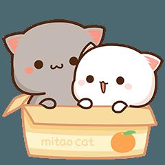 Peach Cat 6
