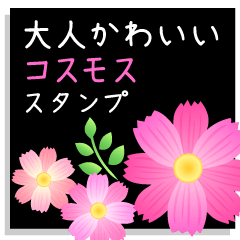 OTONAKAWAII- Cosmos flower