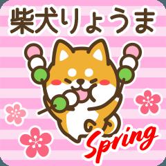 Shiba Ryouma in Spring
