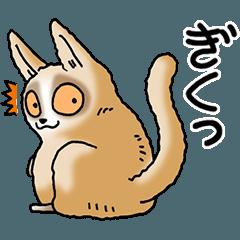 Slow loris part1