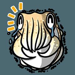 Cuttlefish baby - Sephia