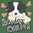 Border Collie's sticker!