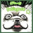 Pekingese's event