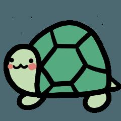 Green cute turtle