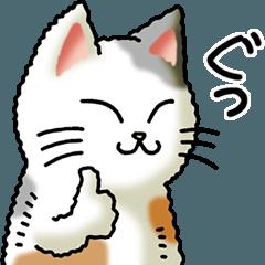 I love cats! Part27 (Japanese Bobtail 6)