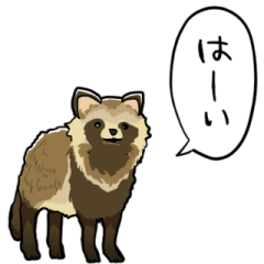 talking raccoon dogs