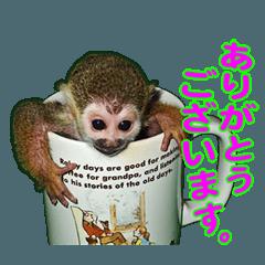 Squirrel Monkey Baby 5