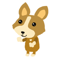 Corgi dog Haru