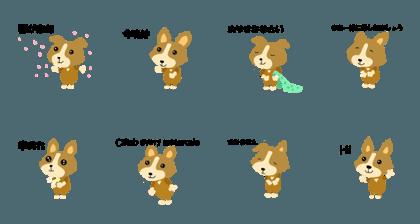 Corgi dog Haru