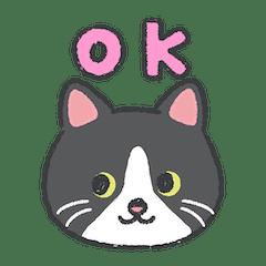ハチワレ猫ちゃんの日常